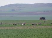 Seguimineto de avifauna en León (autovía León-Valladolid)